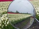 Tulpenvelden 2021_6
